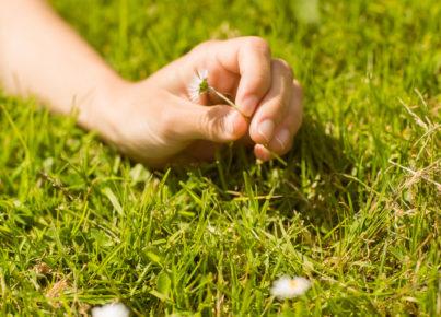 printemps-amitic-fleurs-article
